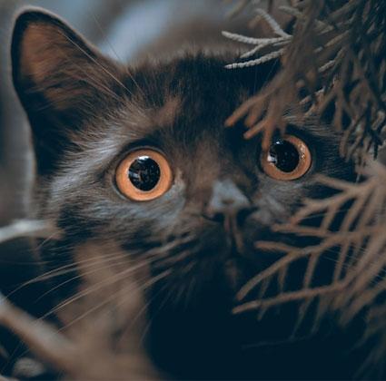 BARF Futter für Katzen