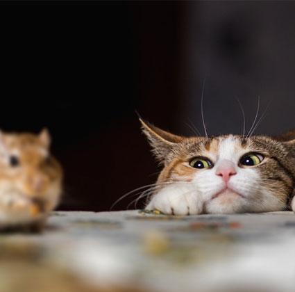 Gefrorene Mäuse kaufen