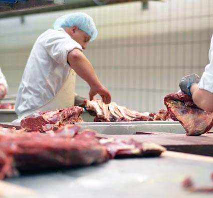 Das Tierhotel - Eigene Produktion